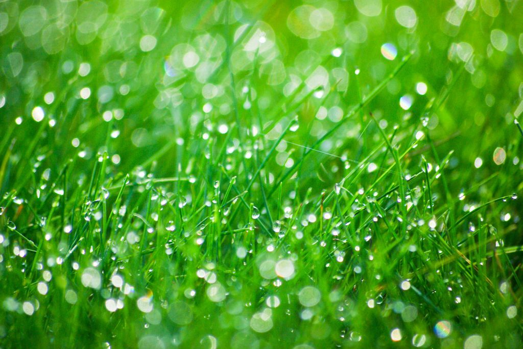 Frontier Landscaping offers expert lawn care in Clark County and Portland metro