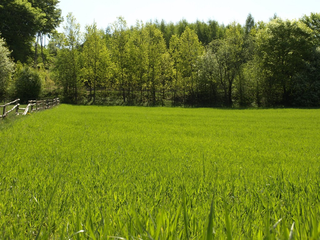 Frontier Landscaping provides expert lawn care in the Clark County and Portland metro region.