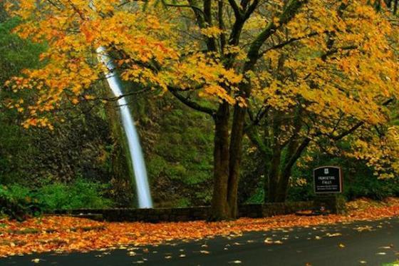 Beautiful Northwest Autumn