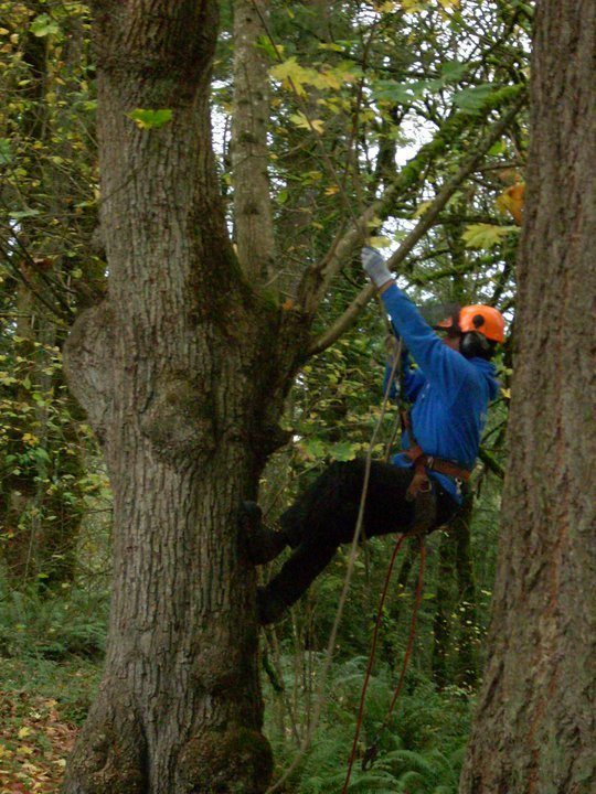 Vancouver Washington pruning services.
