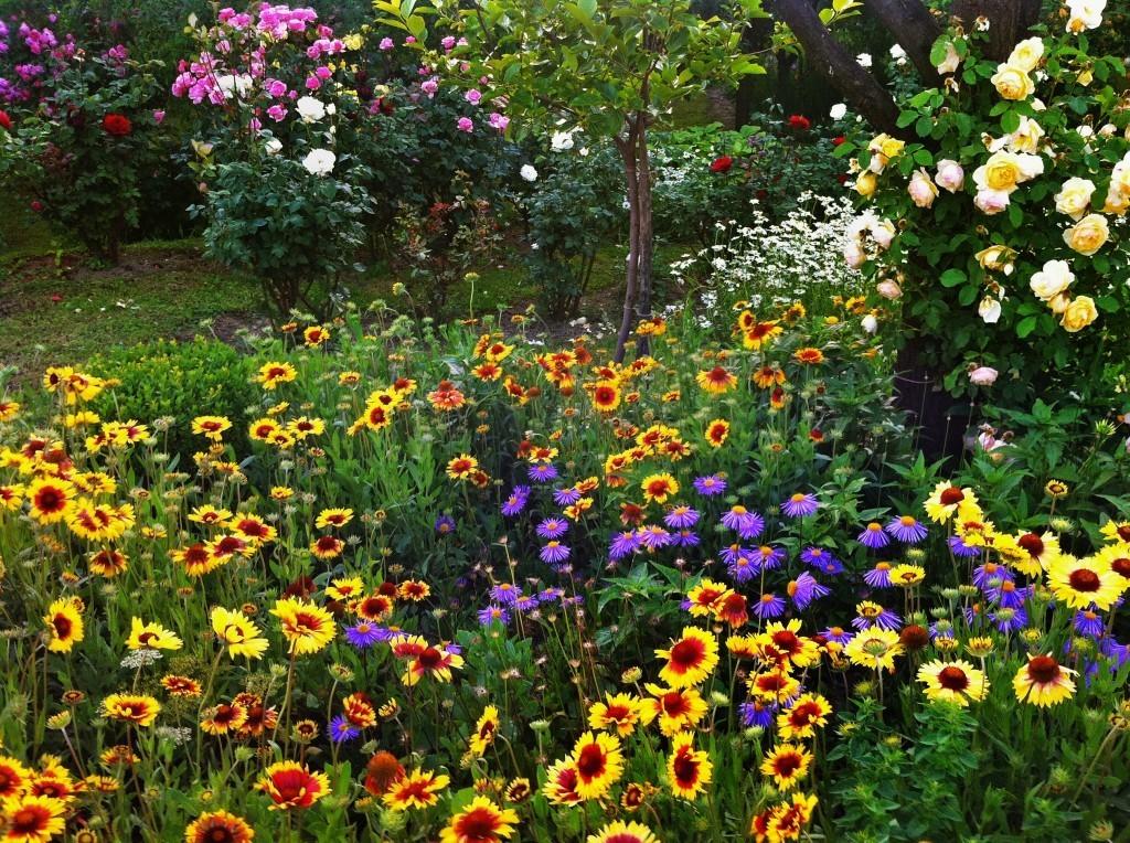 water your garden