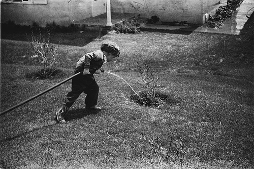 boy watering new tree