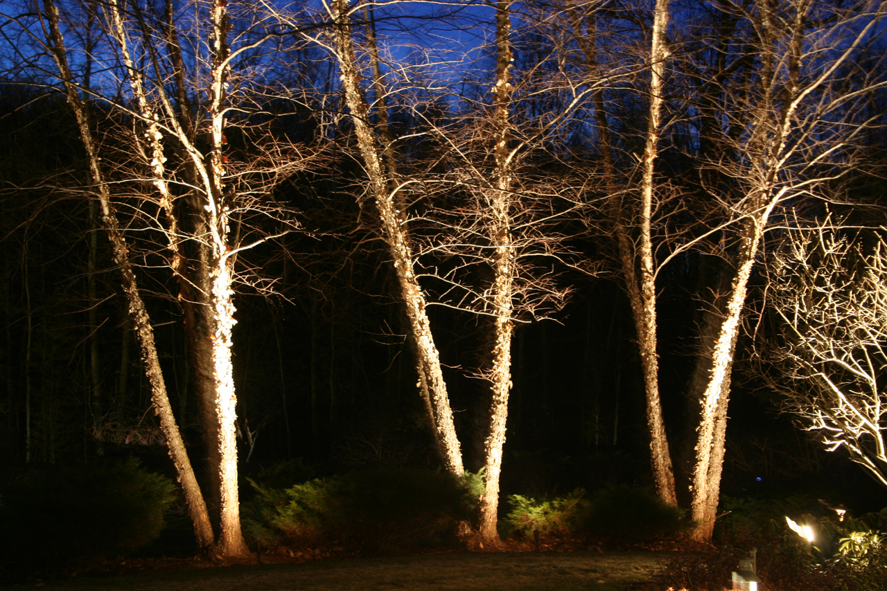 Spotlight Trees