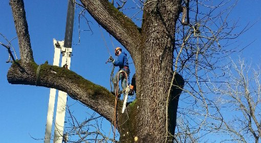 Arborist Camas, Washington