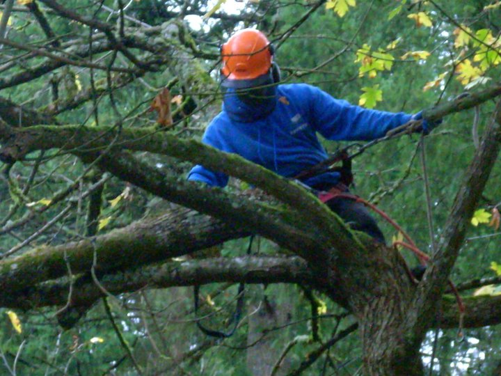 tree services Multnomah County