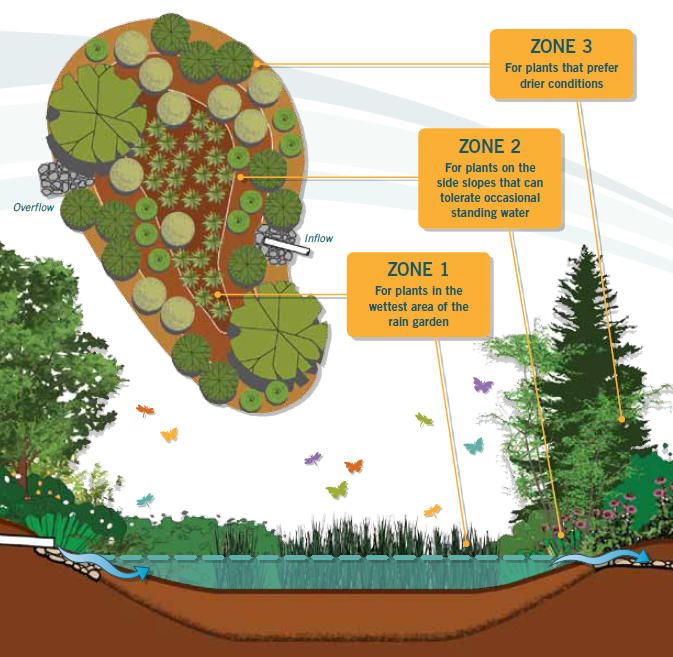 Rain Garden Planting Zones Infographic - Washington State Department of Ecology