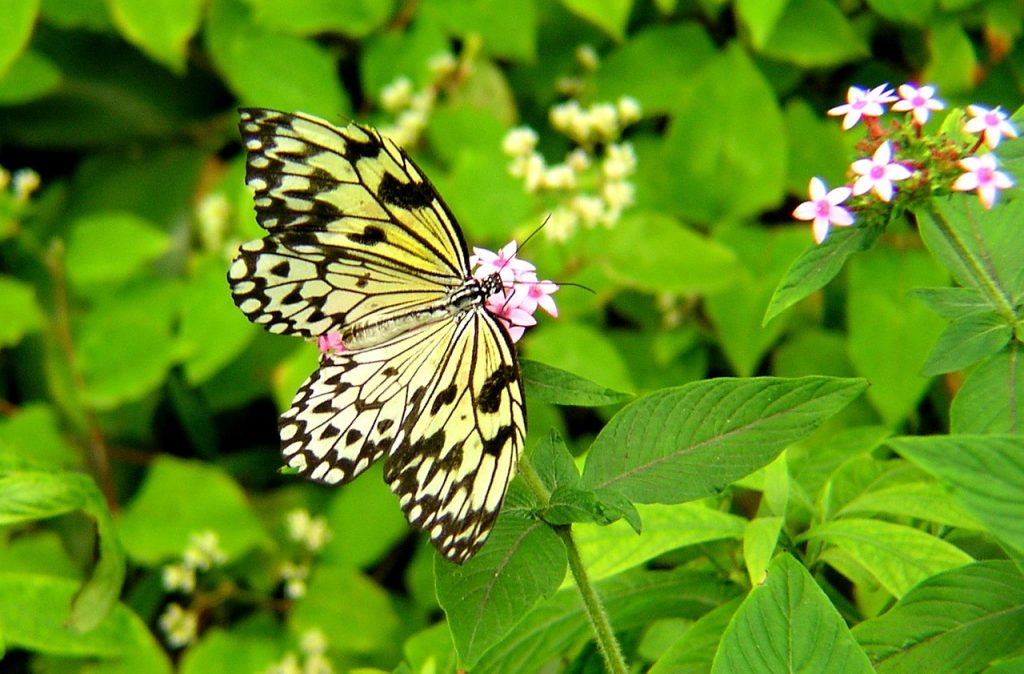 element of a healng garden butterfly on plant