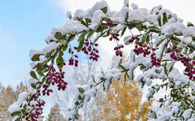 Winter Landscape Maintenance Tasks for an Effortless Spring