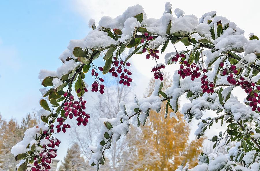 Winter Landscape Maintenance Tasks for an Effortless Spring