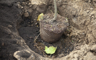 Using a Professional Tree Planting Service to Install and Care for Trees in your Garden